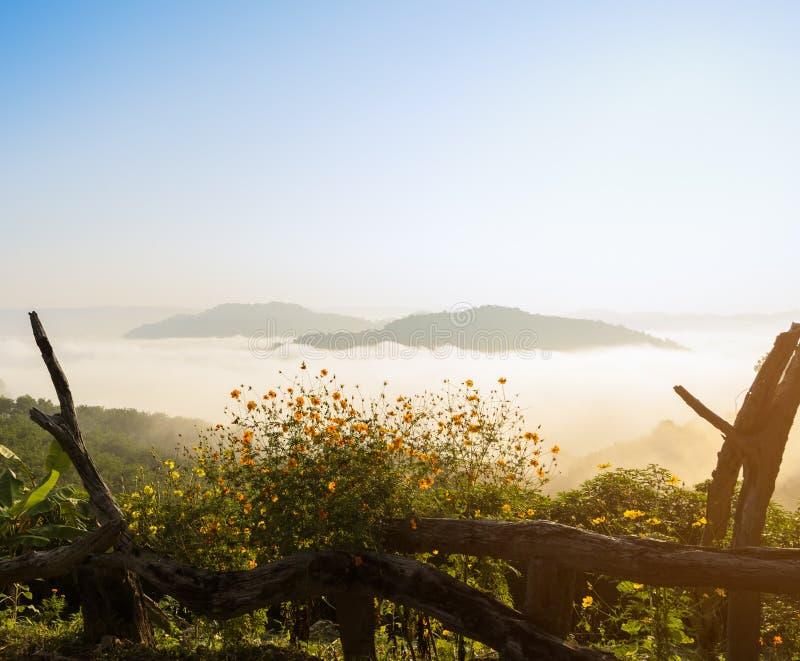 Piękny wschód słońca z morzem mgła nad Mekong rzeką z wolą fotografia royalty free