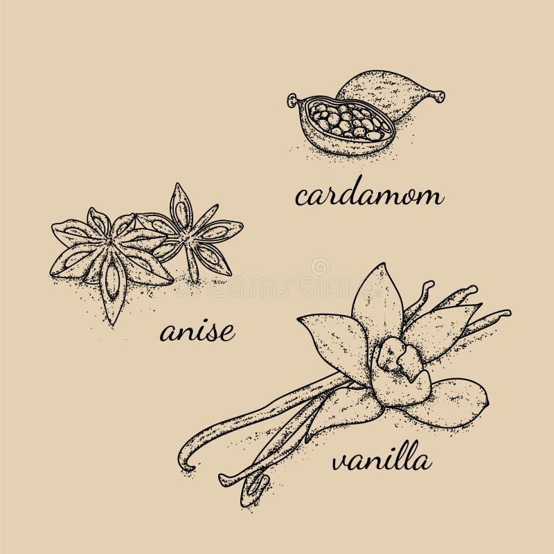 Piękny wybór pikantność i seasonings rysujący ręką Wanilia, kardamon i anyż, również zwrócić corel ilustracji wektora ilustracji