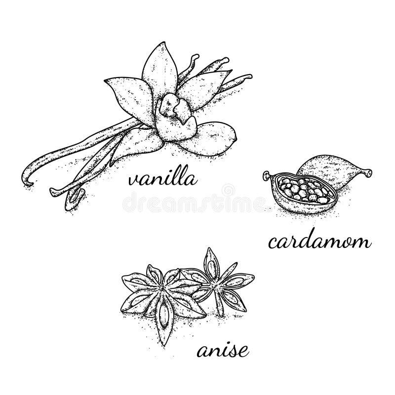 Piękny wybór pikantność i seasonings rysujący ręką Wanilia, kardamon i anyż, również zwrócić corel ilustracji wektora ilustracja wektor
