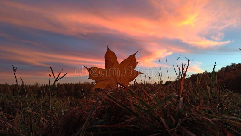 piękny zachód słońca Błękitny i różowy niebo przy zmierzchem nad lasem zdjęcia royalty free