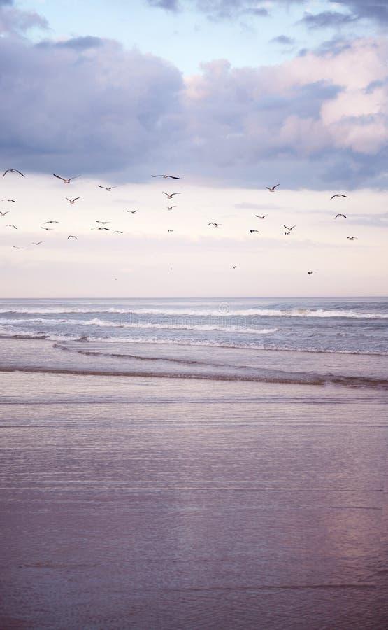 piękny zachód słońca na plaży obraz royalty free