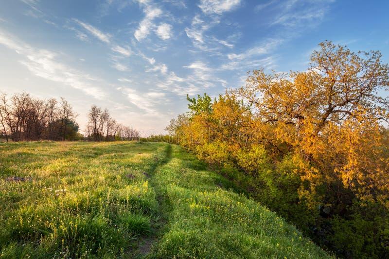 piękny zachód słońca niebieska spowodowana pola pełne się chmura dzień zielonych roślin krajobrazu ruchu pokaz mały nie niebo był zdjęcie royalty free