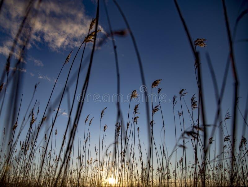 piękny zachód słońca w tle fotografia stock