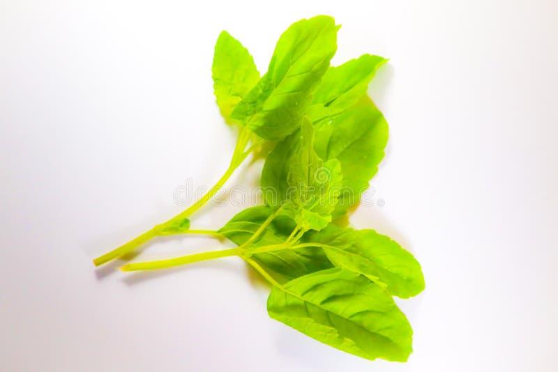 Piękny zamknięty w górę Świętego basila liścia odizolowywającego na białym tle fotografia stock