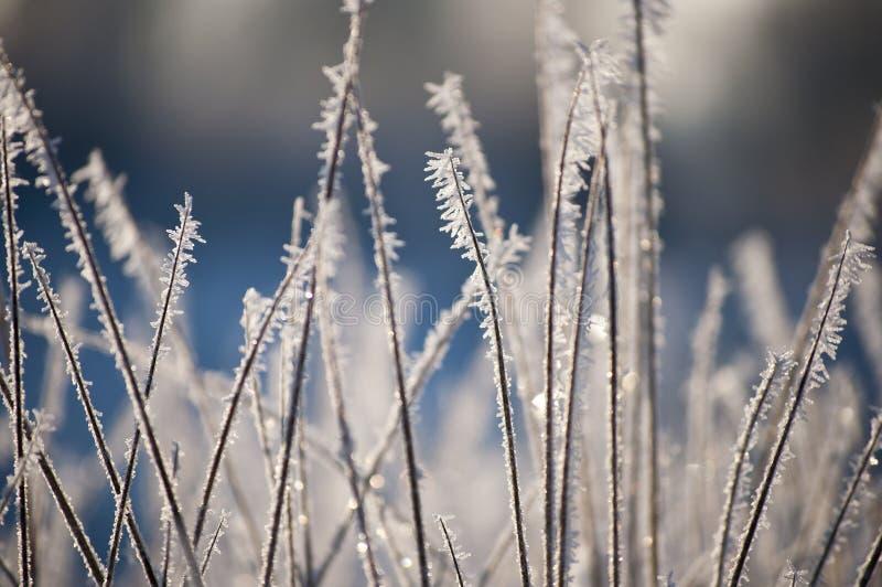 Piękny zbliżenie lodowi kryształy na trawie zdjęcie royalty free