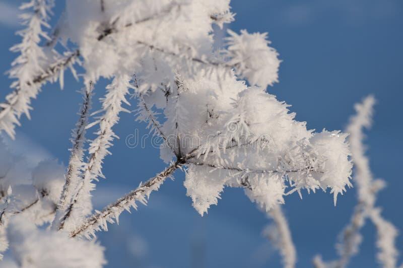 Piękny zbliżenie lodowi kryształy w świetle słonecznym fotografia stock