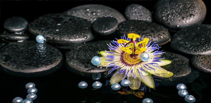 Piękny zdroju położenie passiflora kwiat na zen bazaltowych kamieniach obrazy stock