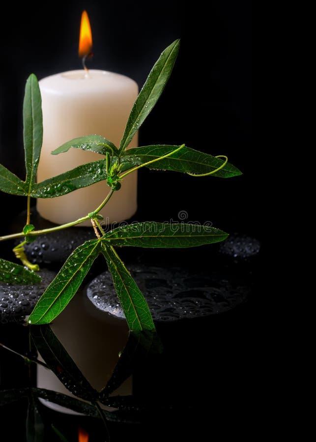 Piękny zdroju położenie zielony tendril passionflower, świeczki zdjęcie royalty free