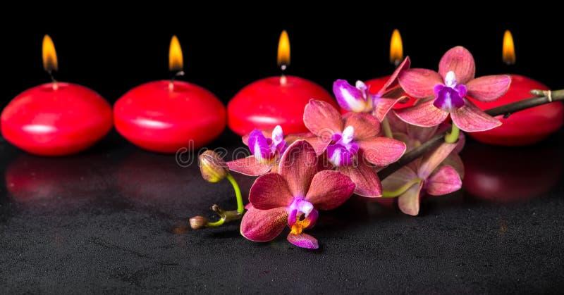 Piękny zdroju pojęcie kwitnienie gałązki czerwony storczykowy kwiat, phalae fotografia stock