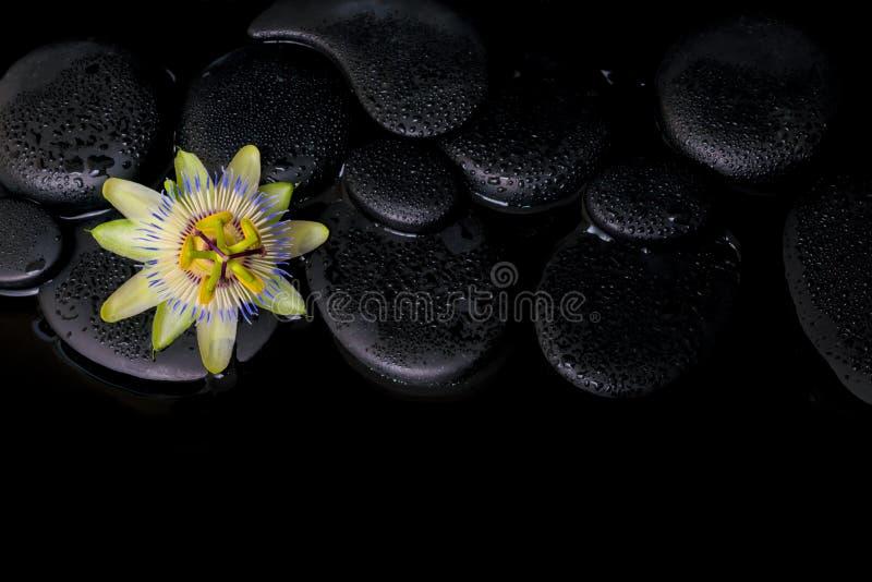 Piękny zdroju pojęcie passiflora kwiat na zen kamieniach fotografia royalty free