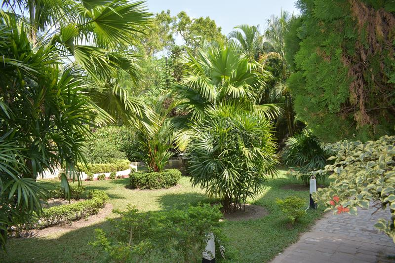 Piękny zieleń ogród natura zdjęcia stock