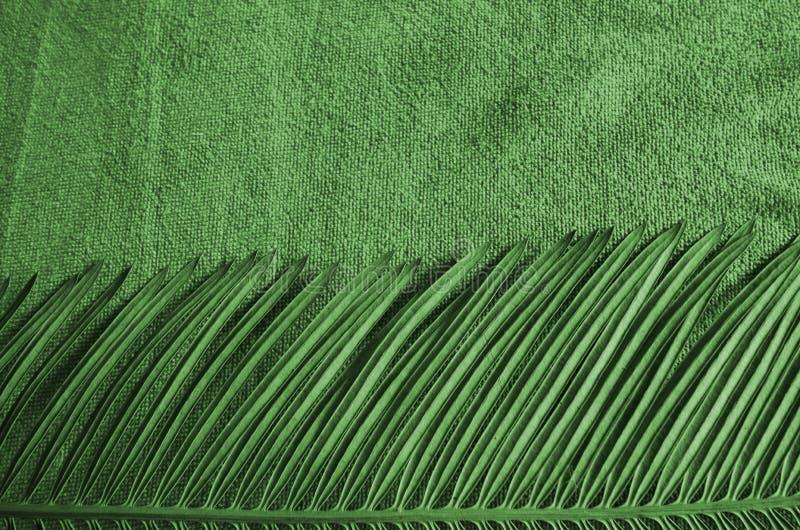 Piękny zieleń wzór cycad ręcznik i liść zdjęcia royalty free