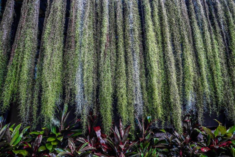 Piękny zielony drzewo, rośliny, las i kwiaty w plenerowych ogródach jawnych parkach i obrazy stock