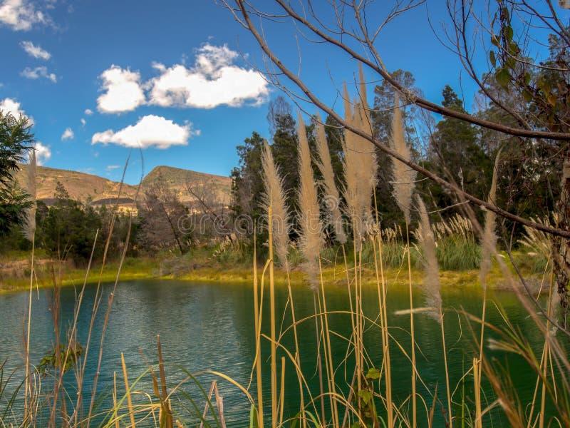 Piękny zielony jezioro za trawa kwiatami obrazy stock