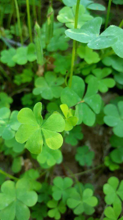 Piękny zielony kwiatu ono uśmiecha się zdjęcie royalty free