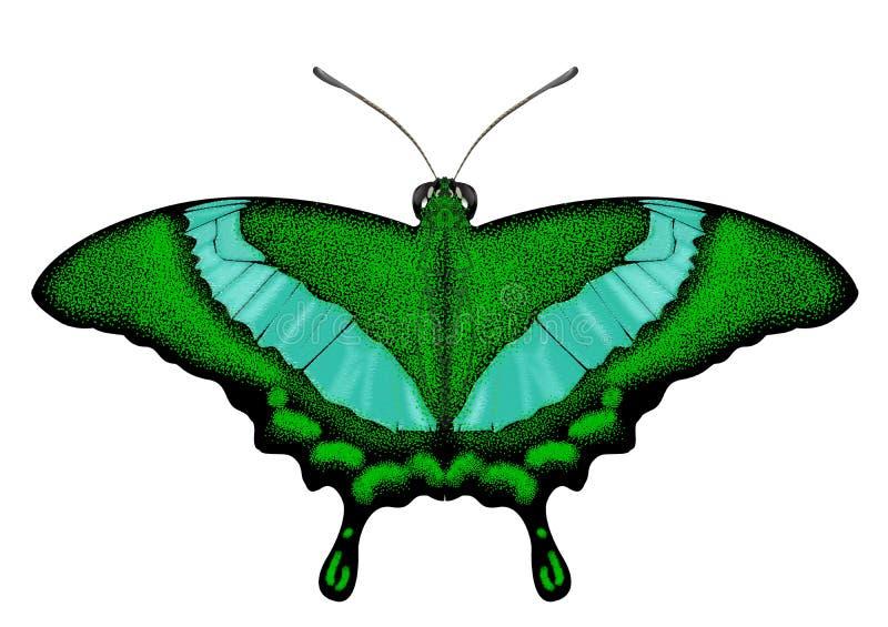 Piękny Zielony motyl - Papilio palinurus obraz stock