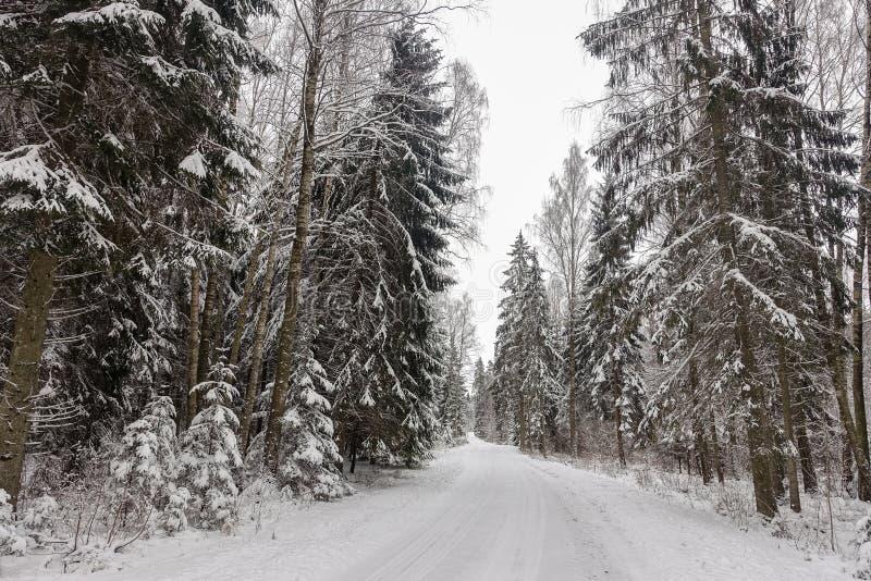 Piękny zima dnia widok z pustą drogą i śnieżystym lasem zdjęcia stock