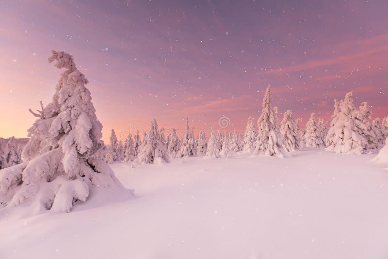 Piękny zima krajobraz, drzewa zakrywający z śniegiem obraz royalty free