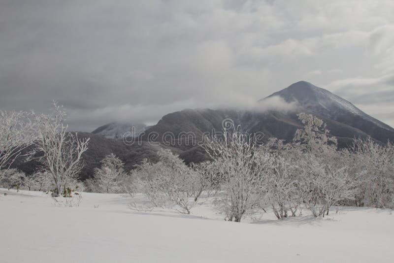 Piękny zima krajobraz z śniegi zakrywającymi drzewami zdjęcie royalty free