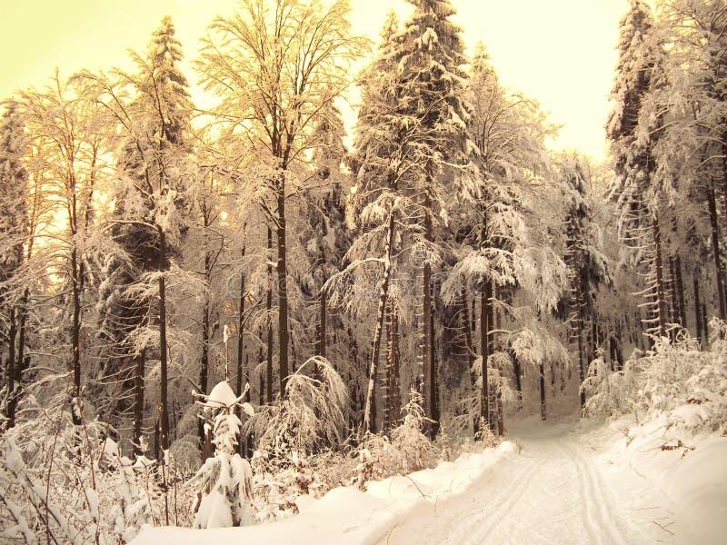 Piękny zima krajobraz z śniegiem zakrywał drzewa zdjęcia royalty free