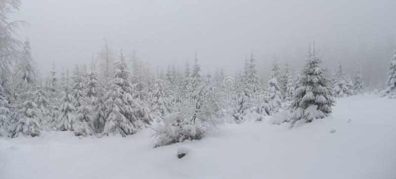 Piękny zima krajobraz z świeżym śniegiem zakrywał świerkowych drzewa zdjęcia stock