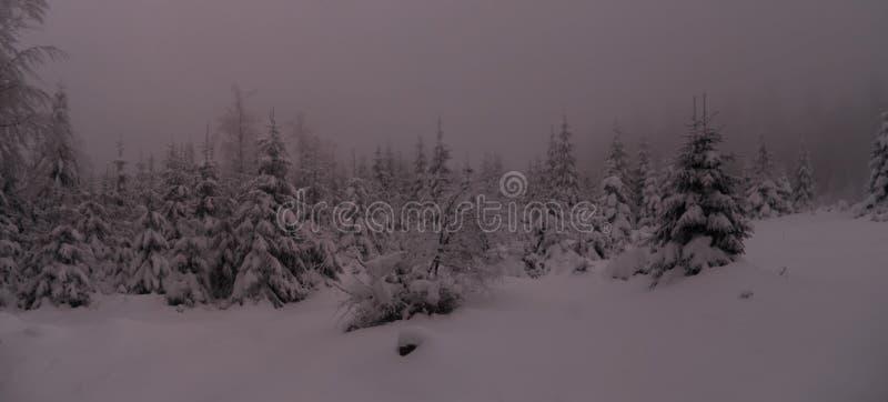 Piękny zima krajobraz z świeżym śniegiem zakrywał świerkowych drzewa obraz stock
