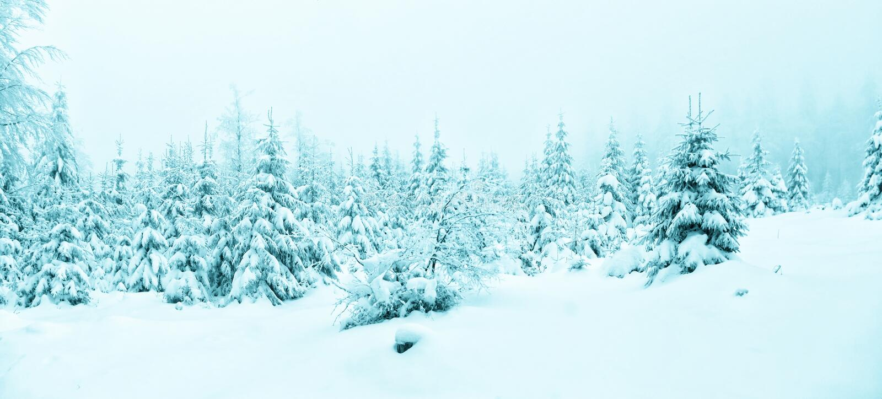 Piękny zima krajobraz z świeżym śniegiem zakrywał świerkowych drzewa obrazy stock
