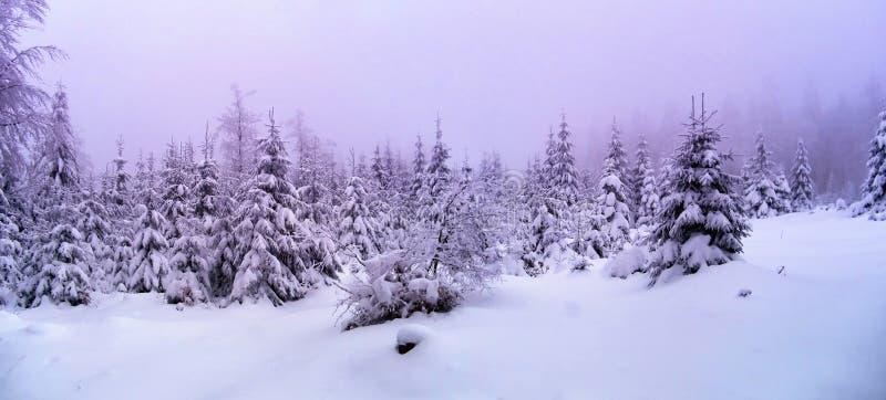 Piękny zima krajobraz z świeżym śniegiem zakrywał świerkowych drzewa fotografia stock