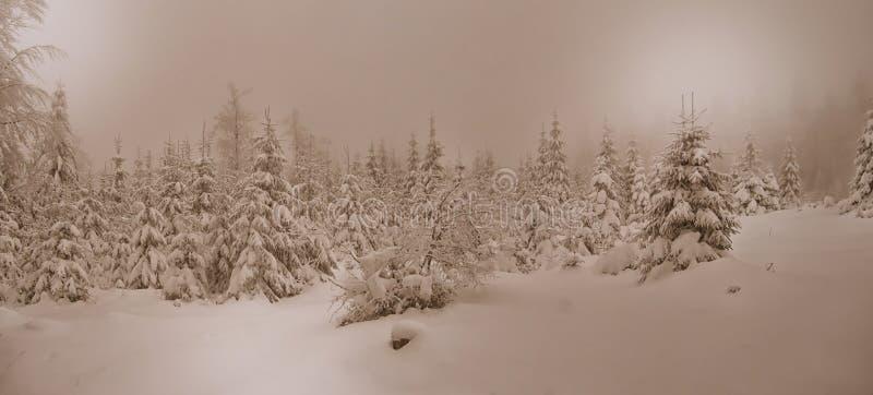 Piękny zima krajobraz z świeżym śniegiem zakrywał świerkowych drzewa zdjęcia royalty free
