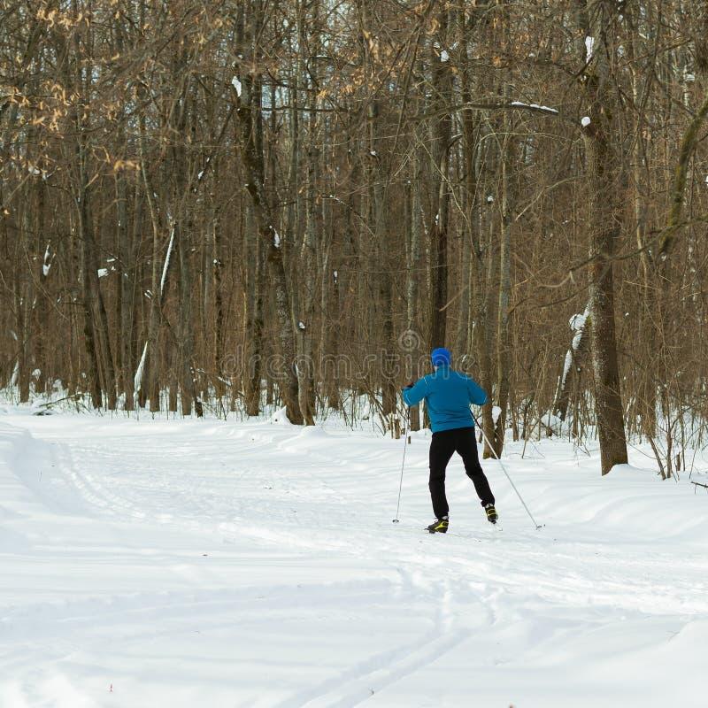 Piękny zima las, narciarka w błękitnym kostiumu i obrazy royalty free