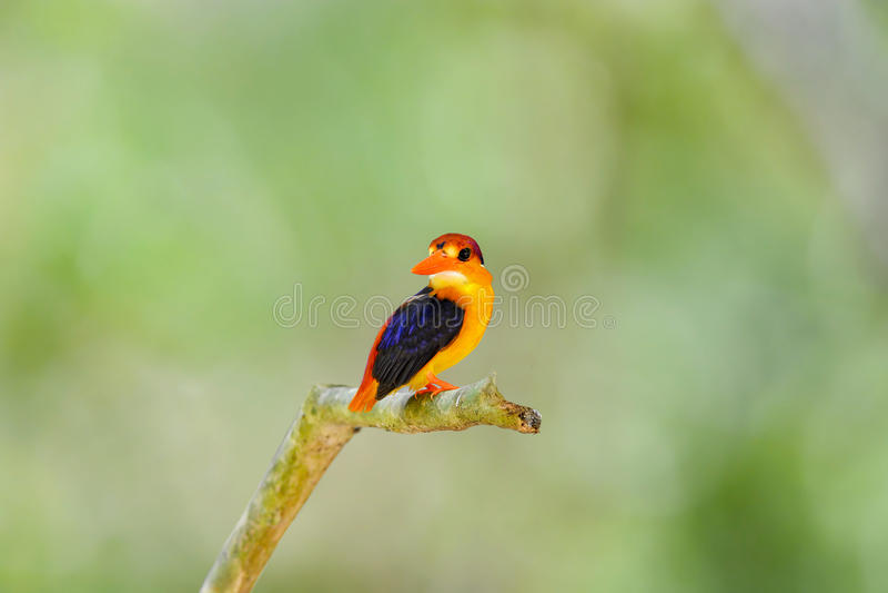 Piękny zimorodka ptak obraz stock