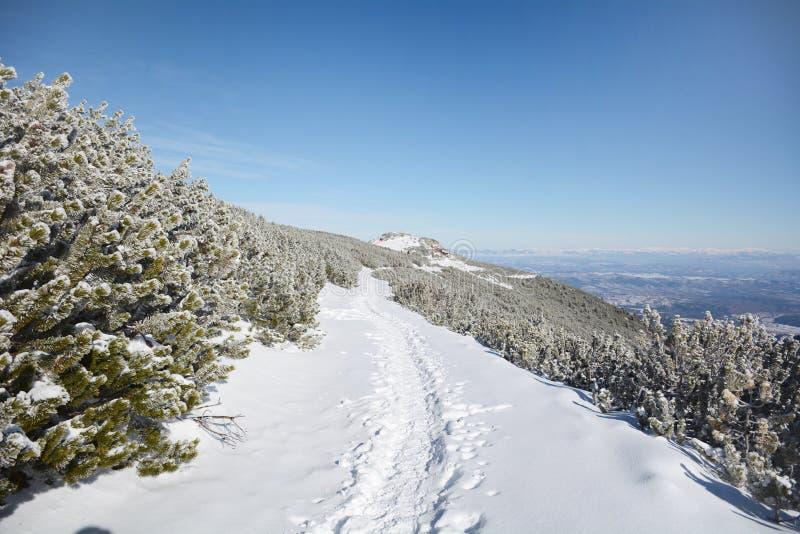 Piękny zimy góry krajobraz od Rila góry, Bułgaria zdjęcia stock