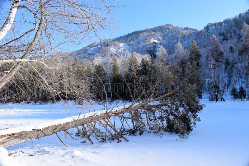 Piękny zimy landscape Góry i brzozy siberia Khakassia fotografia stock