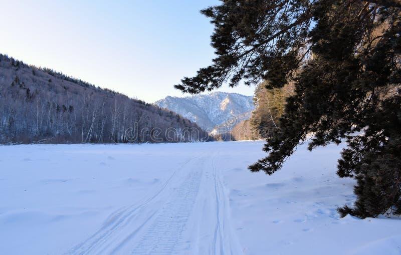 Piękny zimy landscape Góry i brzozy siberia Khakassia obraz stock