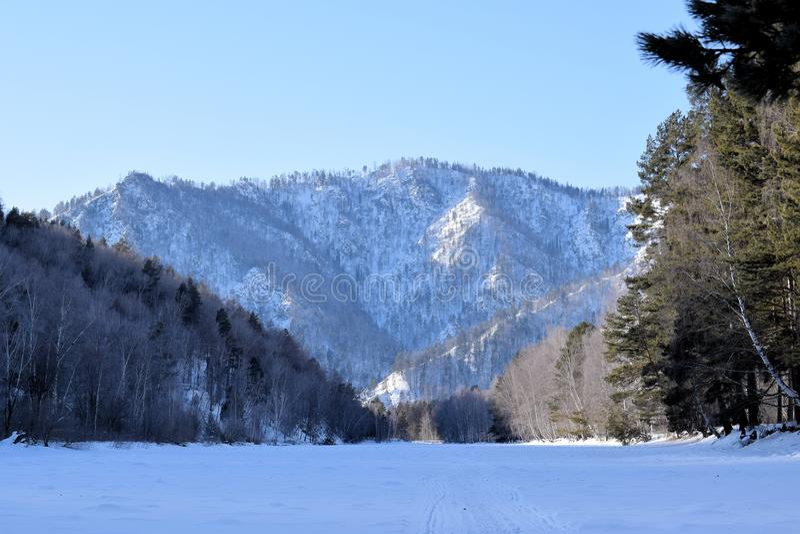 Piękny zimy landscape Góry i brzozy siberia Khakassia obrazy royalty free