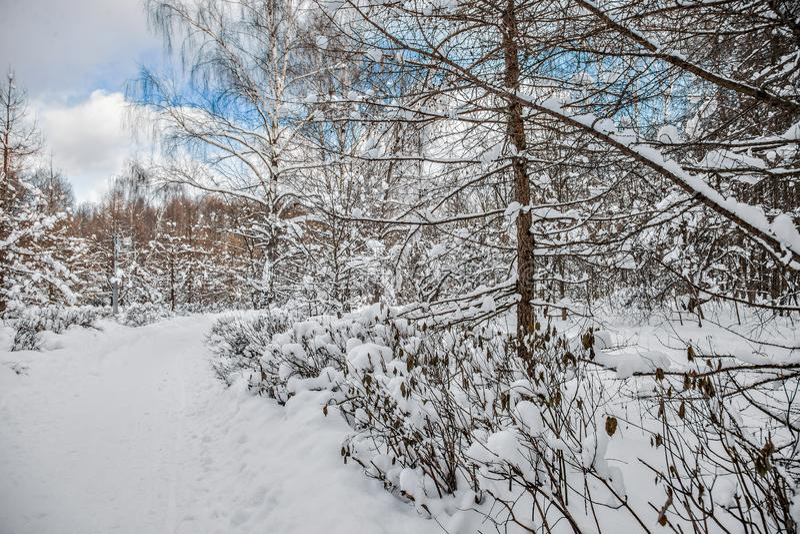 Piękny zimy landscape Miasto park zakrywa w śniegu obraz stock