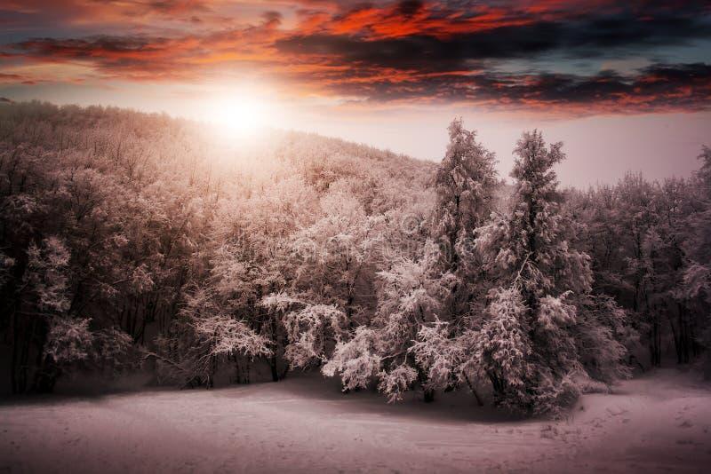 Piękny zimy natury krajobraz, drzewa zakrywał śnieg zdjęcia royalty free
