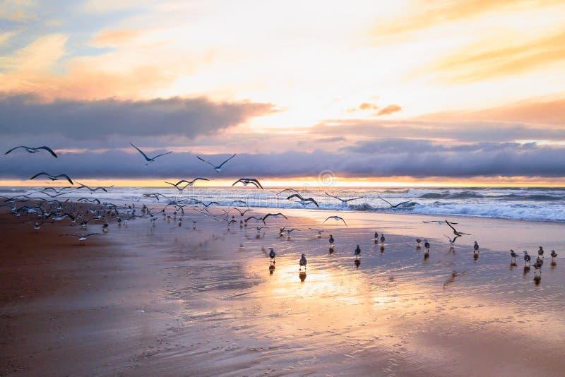 Piękny zmierzch na plaży z kierdlem ptaki fotografia stock