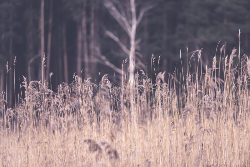 Piękny zmierzch nad jeziorem wśród płoch - rocznik retro e zdjęcie stock