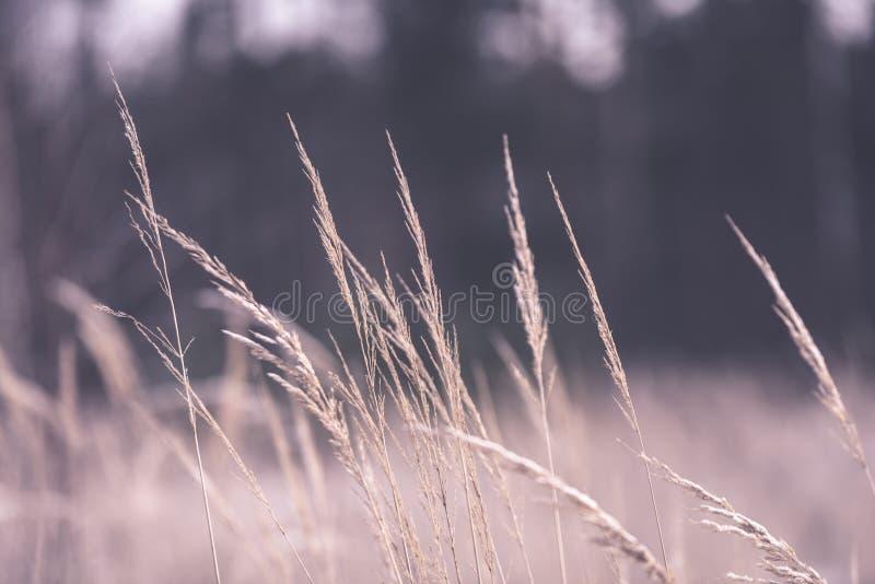 Piękny zmierzch nad jeziorem wśród płoch - rocznik retro e fotografia stock
