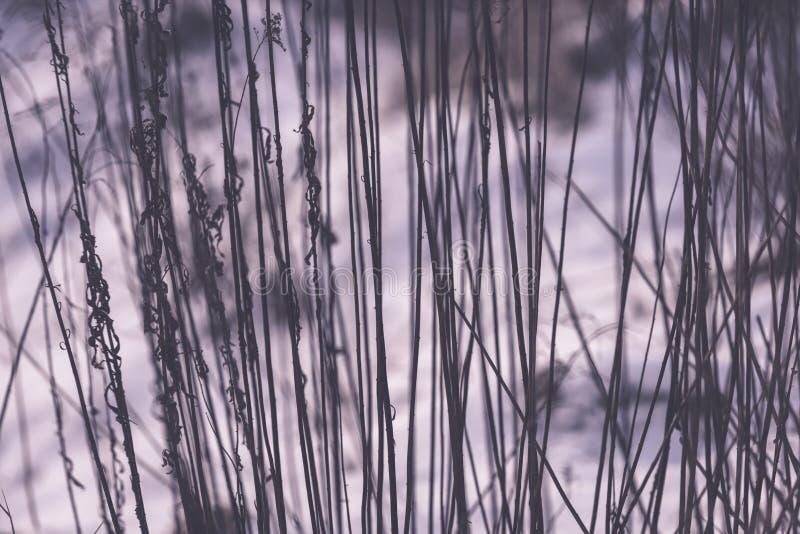 Piękny zmierzch nad jeziorem wśród płoch - rocznik retro e zdjęcie royalty free