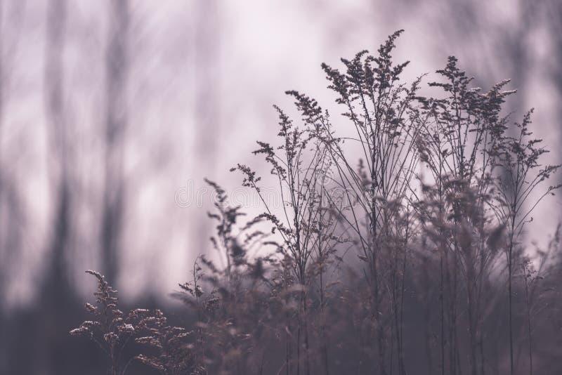Piękny zmierzch nad jeziorem wśród płoch - rocznik retro e obraz royalty free