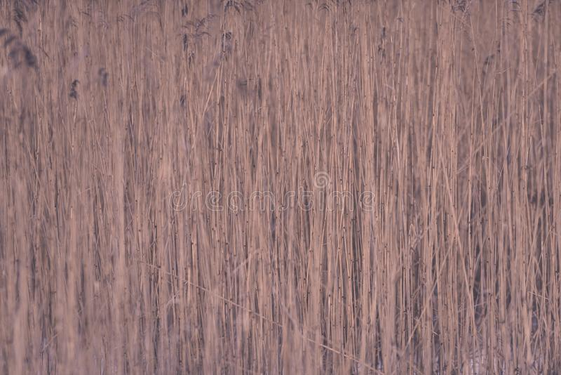 Piękny zmierzch nad jeziorem wśród płoch - rocznik retro e fotografia royalty free