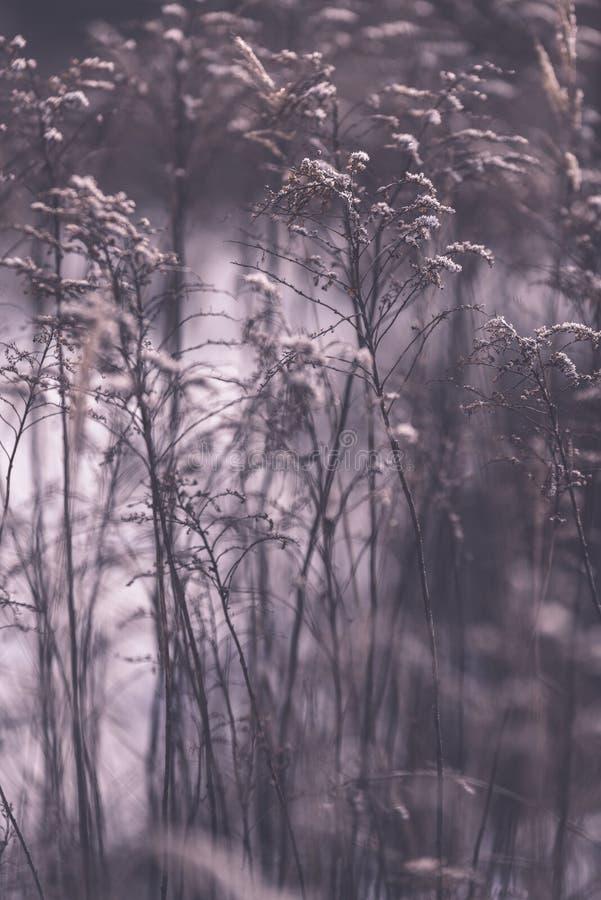 Piękny zmierzch nad jeziorem wśród płoch - rocznik retro e obraz stock