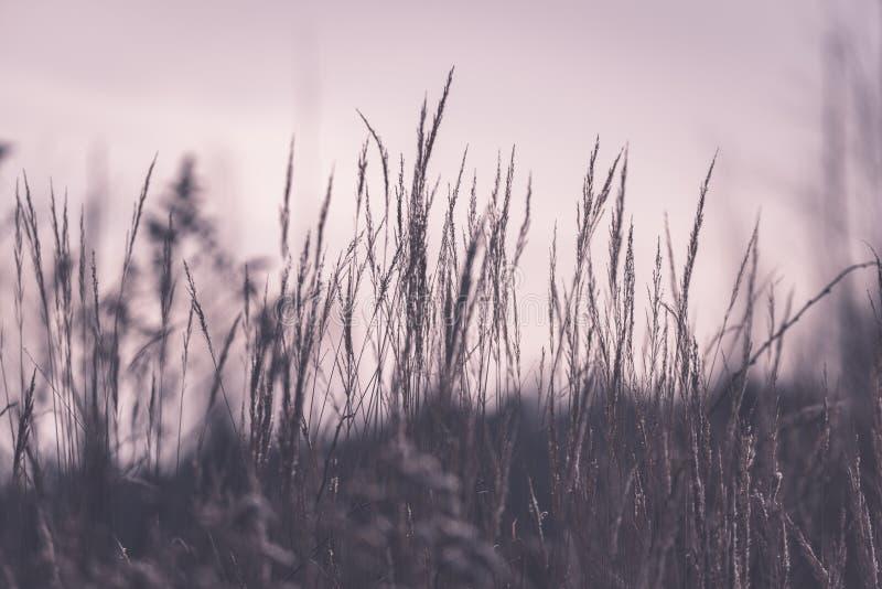 Piękny zmierzch nad jeziorem wśród płoch - rocznik retro e zdjęcia stock