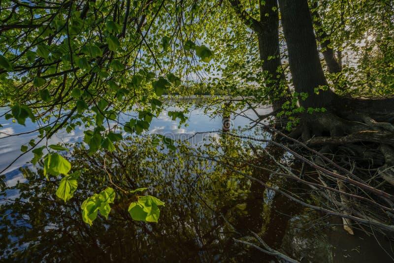 piękny zmierzch rzeką pod drzewem opuszcza i rozgałęzia się Spokojna woda zdjęcie stock