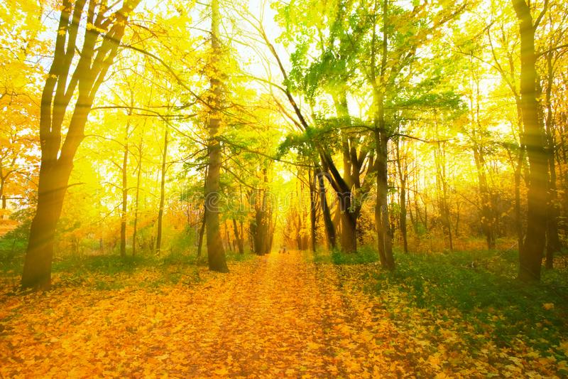 Piękny zmierzch w jesień parku obrazy royalty free