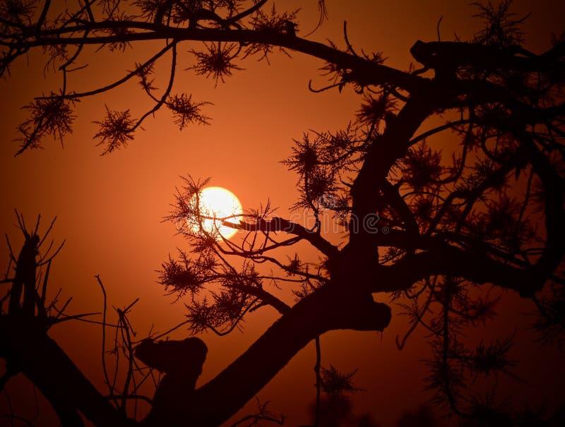 Piękny zmierzch z naturalną drzewo zapasu fotografią obraz stock
