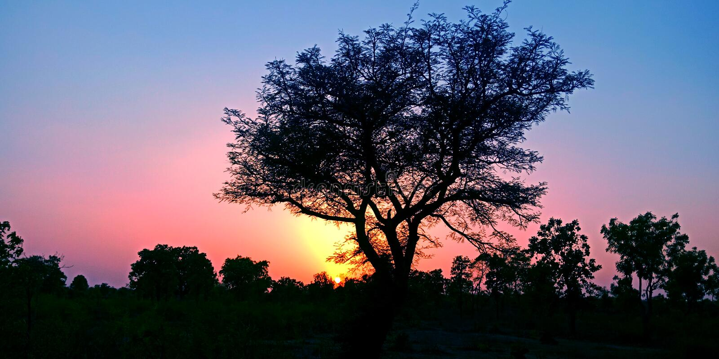 Piękny zmierzch za drzewem w lasowej akcyjnej fotografii zdjęcie royalty free