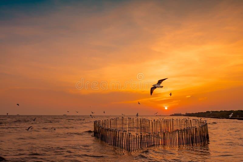 Piękny zmierzchu niebo, chmury nad morzem i Ptasiej latającej pobliskiej obfitości namorzynowy lasowy Namorzynowy ekosystem Dobry obraz royalty free